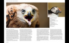 2013.04 LPM Bird Photography article pages3-4