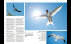 2013.04 LPM Bird Photography article pages5-6