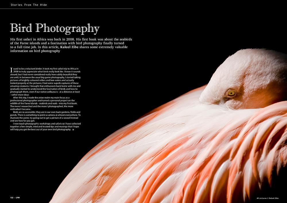 Article - Bird Photography