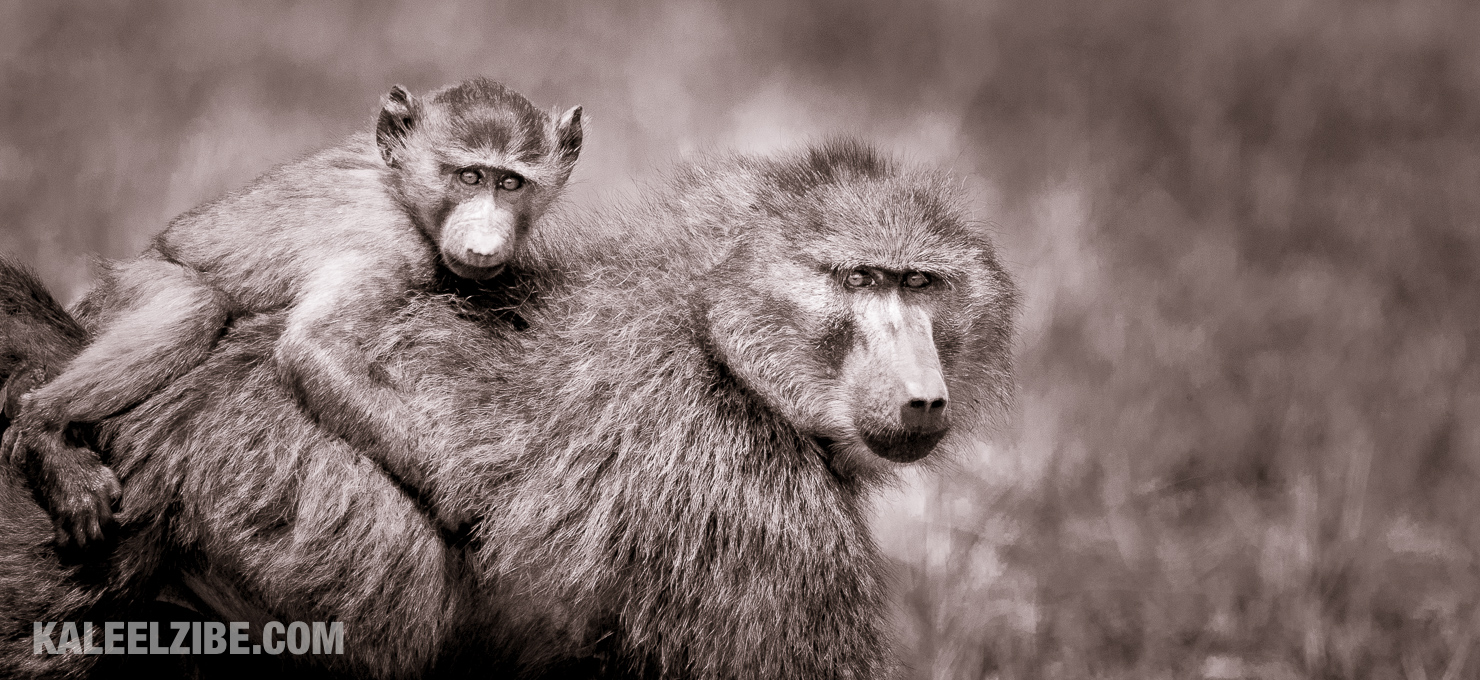 A baboon baby on our drive from the airstrip!